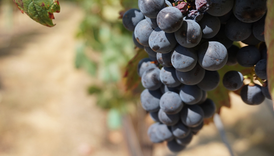 temecula_wine_country